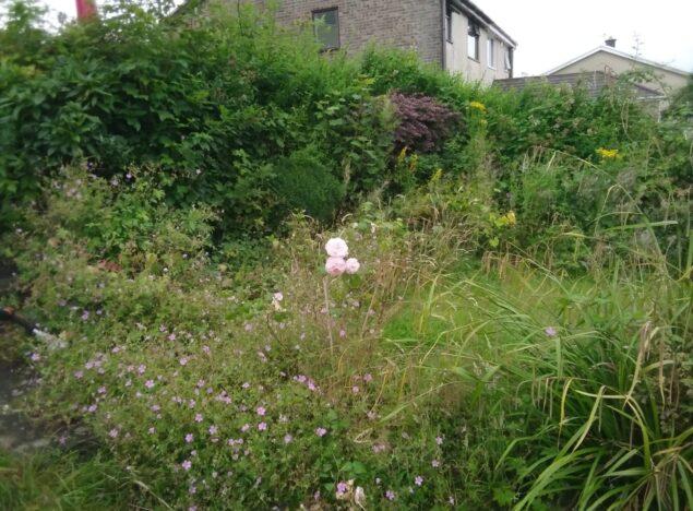 overgrown garden Clearance Bridgend