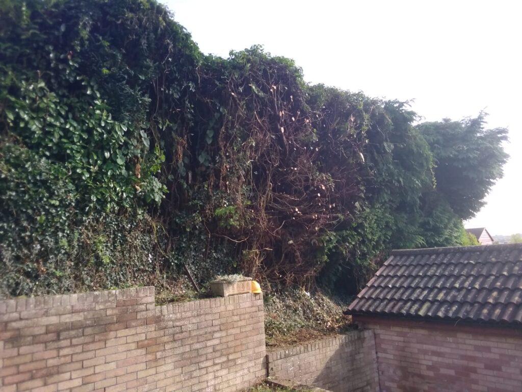 hedge cutting bridgend