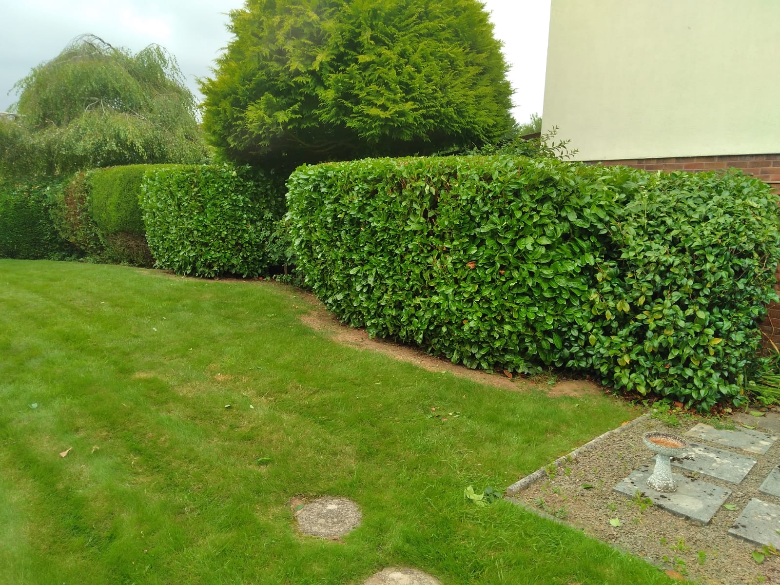 hedge trimming thronhill cardiff