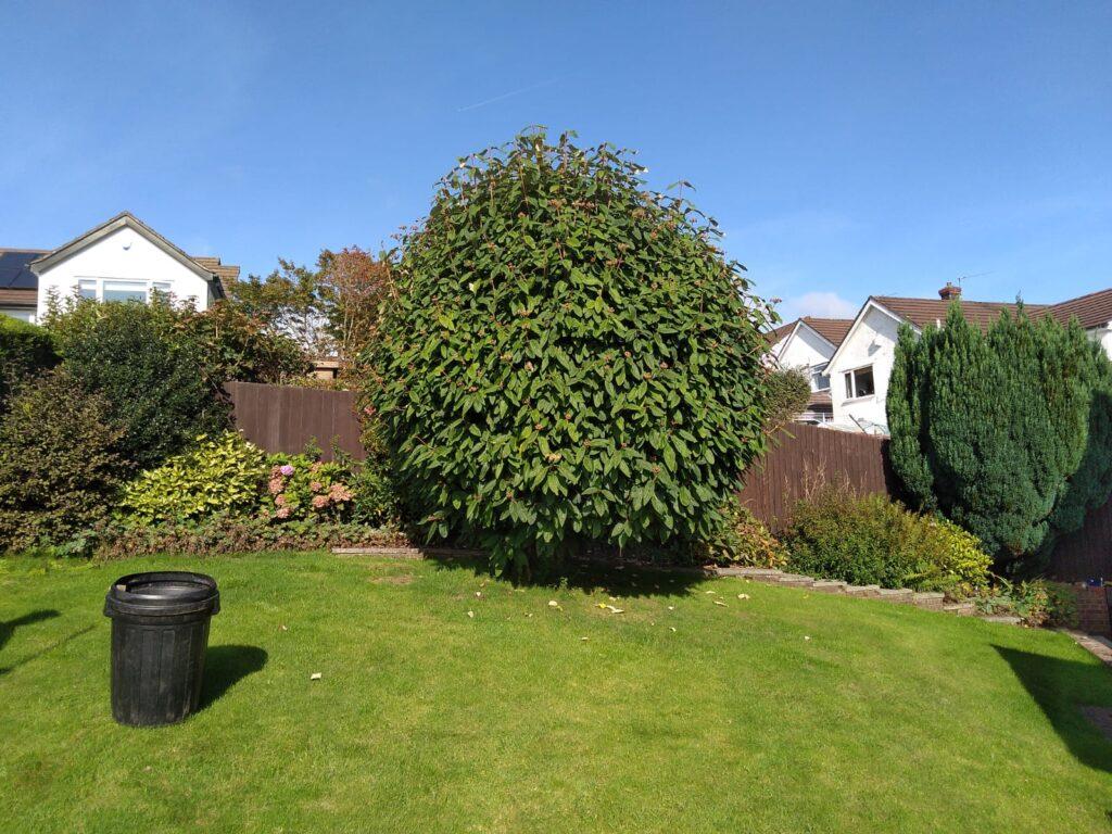 Hedge Cutting services Pontypridd