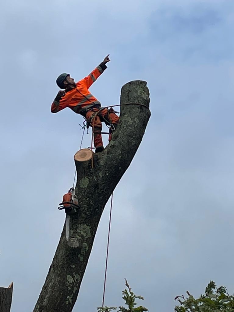 tree surgery Bridgend